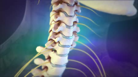 csökken : Animation of a healthy lumbar spine. The effects of arthritis include the projection of osteophytes. These changes can lead to pain, reduced mobility and numbness. Stock mozgókép