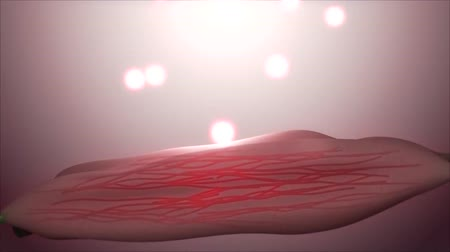 sistemas : Muscle Tissue Or Stock Footage