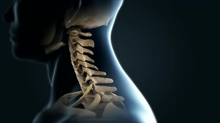 kosterní : The lumbar spine refers to the lower back. It s all about it.