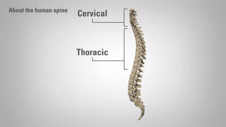 grãos : The lumbar spine refers to the lower back. It s all about it.