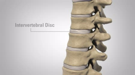 damar : The lumbar spine refers to the lower back. It s all about it.