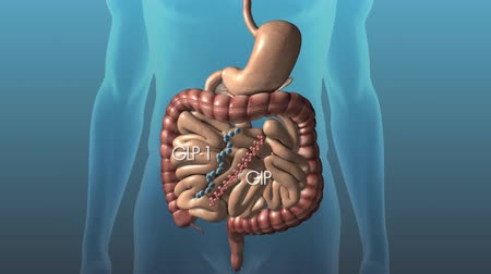 ilustracje : Insulin released from the pancreas, amylin and glucagon
