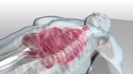mar : 3D Medical Animated Transparent Human Internal Organs, Breathing, lungs Vídeos