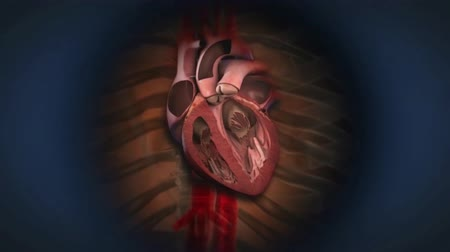 morrer : With each heartbeat, the heart sends blood. After the heart. Stock Footage