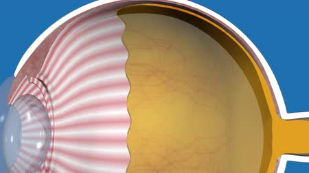 blindness : 3D medical animated eye anatomy on blue background, glare
