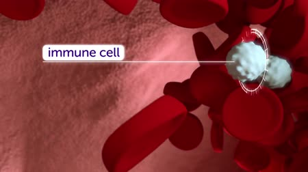 alerji : Infectious cells are used for the treatment of the immune system.