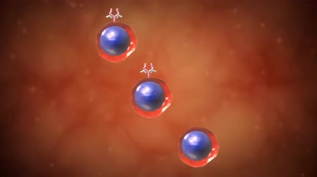 плодоношение : Lymphocyte Production and Maturation. Principle checkpoints in lymphocyte maturation. Positive and negative selection