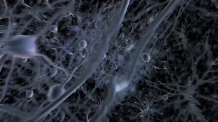 crânio : Neurons during Synapsis inside. Journey Into Human Brain With Neurons Vídeos