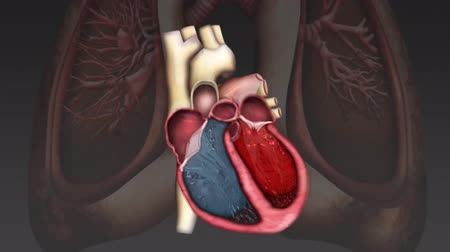 heart beat : Scientifically accurate simulation of blood Stock Footage