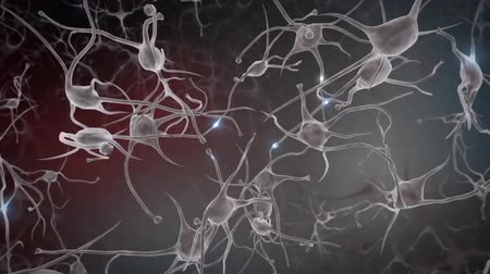 nervous system : Neurons, Neural Connections, Signal Transmission By Neurons Stock Footage