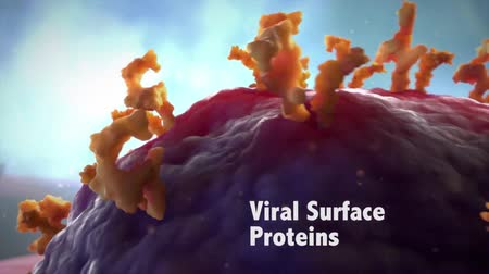 phagocytosis : A Virus in a blood stream with erythrocytes, leukocytes and blood platelets. Stock Footage