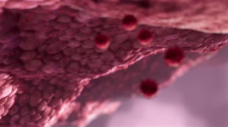 organizma : A Virus in a blood stream with erythrocytes, leukocytes and blood platelets. Stok Video