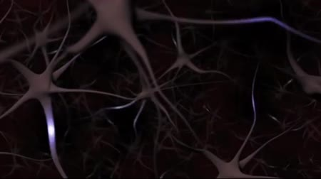 nervous system : Neural oscillations, or brainwaves.