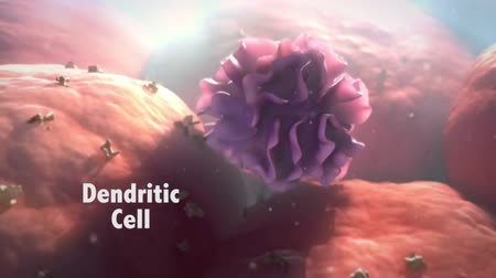mhc : Dendritic cells are antigen presenting cells. Their main function is to be present.