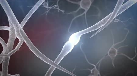 neuronal : A neuron or nerve cell