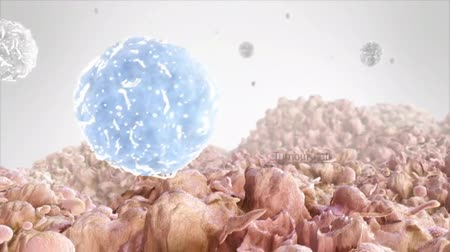 malignancy : T cell A cytotoxic cell is a type of lymphocyte. Also called cytotoxic T lymphocyte and killer T cell.