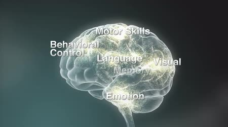 cerebral hemisphere : Human head with brain. Electric impulses. Biology. Loopable. 3d human with a brain. Stock Footage