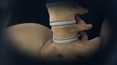 ból pleców : Animation of a healthy lumbar spine. The effects of arthritis include the intervertebral discs