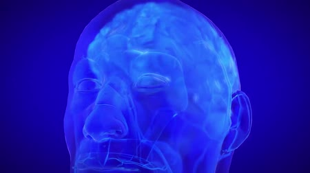 temporal : 3D Illustration of Human Brain with Nervous system Stock Footage