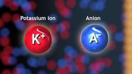 peptide : Cell transports sodium Potassium ions to cell. In the case of active transport, the transmembrane proteins are known as ion pumps