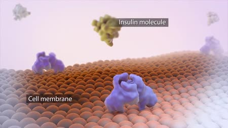 glicose : In this animated video, cell membrane does not accept