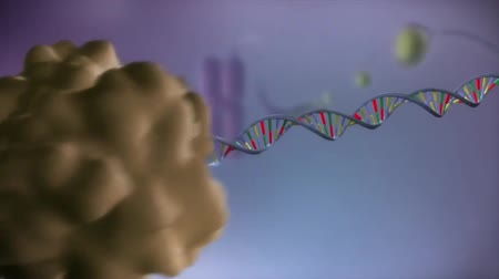 genético : High quality animation of DNA strand.RNA and cell nucleus