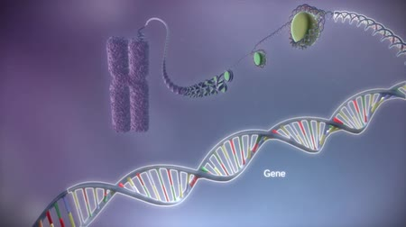 helezon : The human genome is a DNA molecule found in human genome. Stok Video