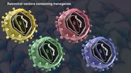 plemniki : retroviral vectors containing transgene 3d animation