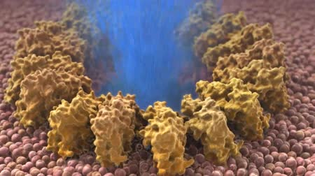 macrophage : The immune response is deficient in your body. Stock Footage