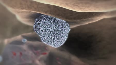 material body : The nucleus of the living cells contains the genetic material. Stock Footage