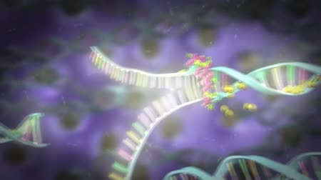 nervous system : Stem cell biology. DNA Methylation and Cellular Reprogramming Stock Footage