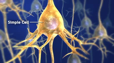 nervous system : A single axon in the central nervous system.