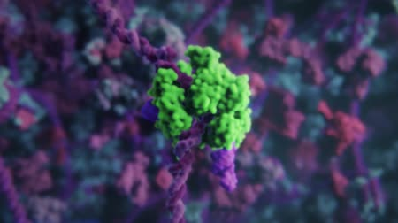 interspaced : Genome editing, or genome engineering, is a type of genetic engineering in which DNA is inserted, deleted, modified or replaced in the genome of a living organism. Stock Footage