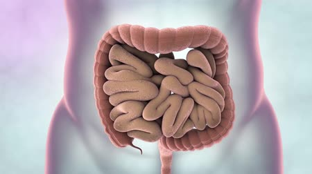 inflamed : The intestine is part of the digestive system. It is made up of the small intestine and the large intestine. The colon and rectum are parts of the large intestine.