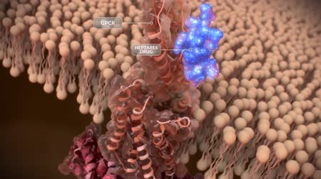 pyramidal : G protein-coupled receptors (GPCRs) form the largest family of transmembrane receptors Stock Footage