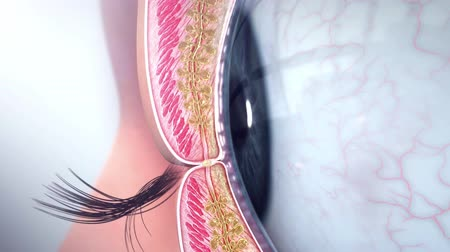 scanning : 3D Medical Animation of Anatomy of the Eye. Formation of eye internal complex Stock Footage