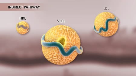 interno : LDL delivers cholesterol to cells in the body. As VLDL particles are stripped of triacylglycerol, they become more dense. These particles are remodeled at the liver and transformed into LDL.