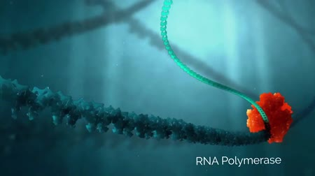 fata : Molecular mechanisms of template-independent RNA polymerization by tRNA nucleotidyltransferases Stock Footage