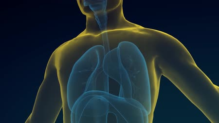 Transparent man breathing on black back ground, 3D Stock Footage