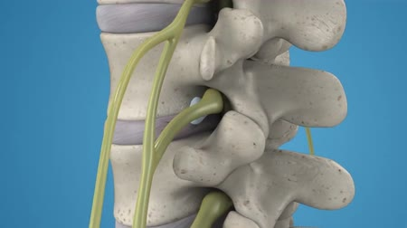 ból pleców : 3D animation of the spinal cord on blue background. Endoscopic lumbar discectomy