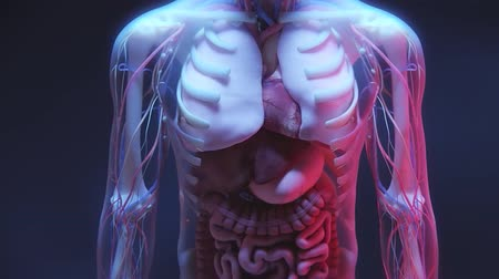 erythrocyte : Human Anatomy and Internal Organs, 3D Medical Animation
