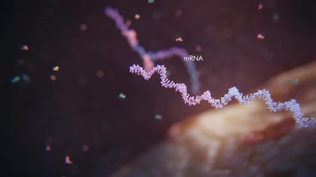 apaság : Revolving Dna Complete Polymerase Chain Reaction Real Time Pcr Taq Stock mozgókép