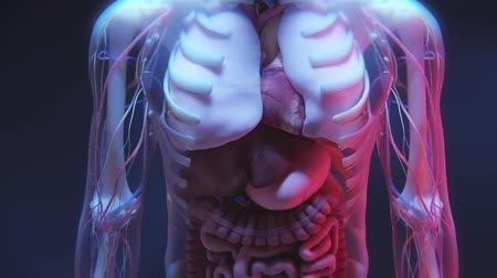 gmos : Realistic animated video of human internal organs. Journey from the human internal organs to DNA