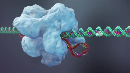 engineered : The process of transformation of genes with DNA sequences into functional protein structures.