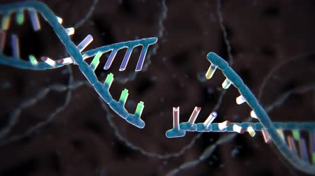 transcription : The process of transformation of genes with DNA sequences into functional protein structures.