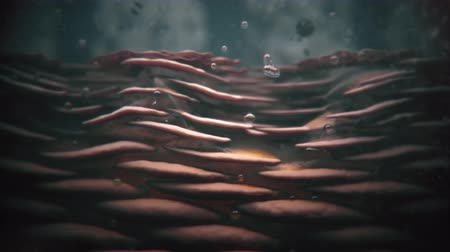 eixo : skin destruction by viruses 3d animation Stock Footage
