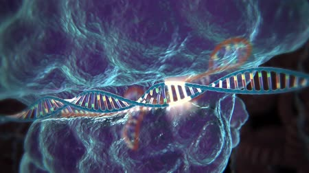 factor : The process of transformation of genes with DNA sequences into functional protein structures.