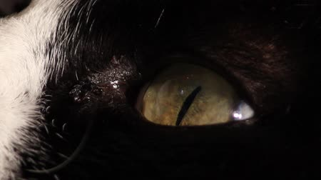 night : Hd clip of the eye of a black cat moving Stock Footage