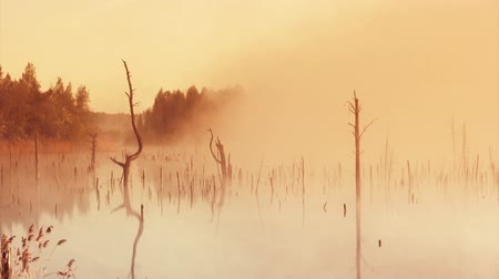 környezeti : Misty morning sunrise on the marsh
