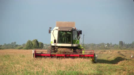 milho : Combine harvester working a wheat field Stock Footage